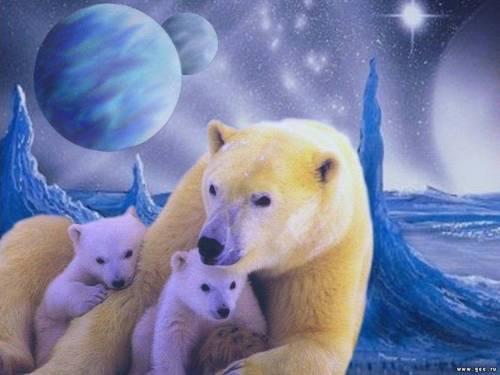 Обои животные картина белые