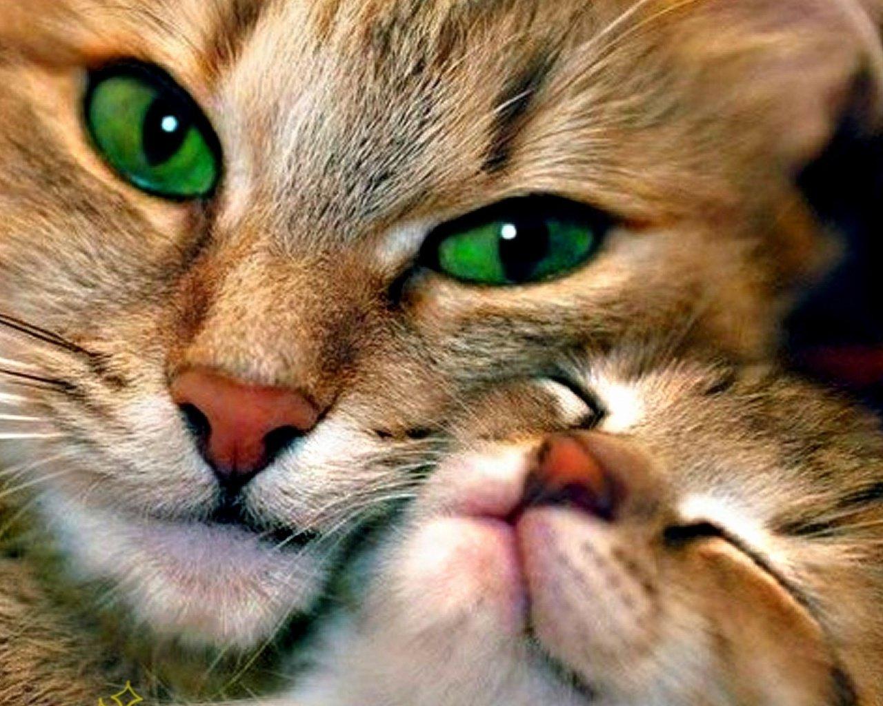 Помнят ли кошки своих котят?