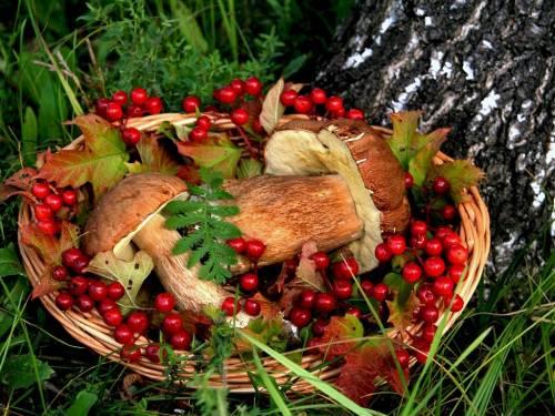 Обои - Грибы и ягоды в корзине скачать бесплатно